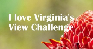 Virginias View Challenge